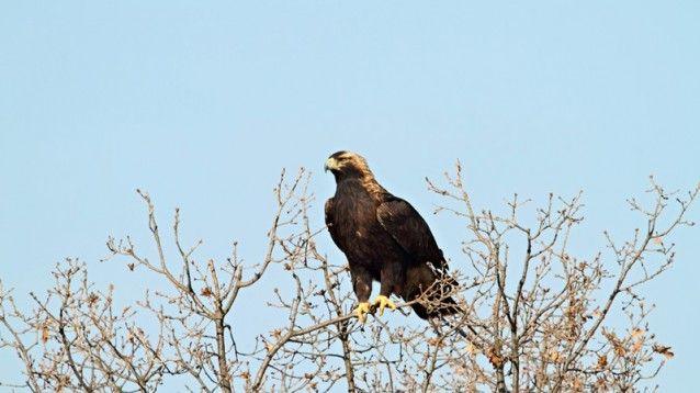 Светослав Спасов, www.NatureImages.eu